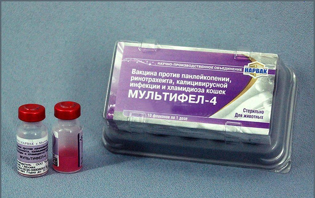 Ветеринарный препарат глобкан 5: инструкция по применению - вет-препараты