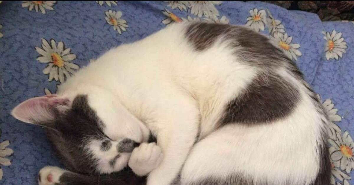 Кот плохо ест и постоянно спит, вялый: в чем причина, что делать?