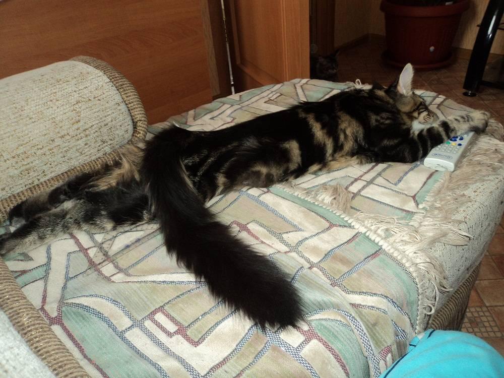 Сколько живут кастрированные коты