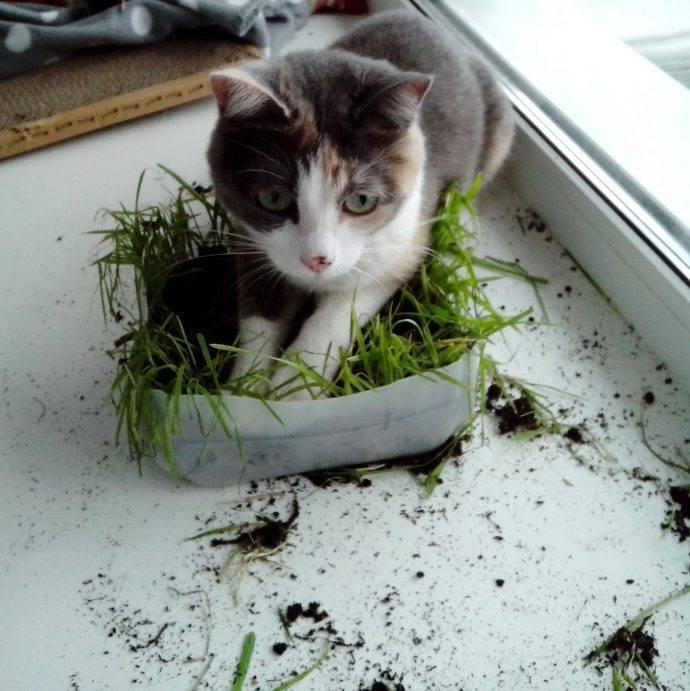 Можно ли кошкам давать семечки: о пользе и вреде семян подсолнечника, тыквы, сколько давать, кому нельзя
