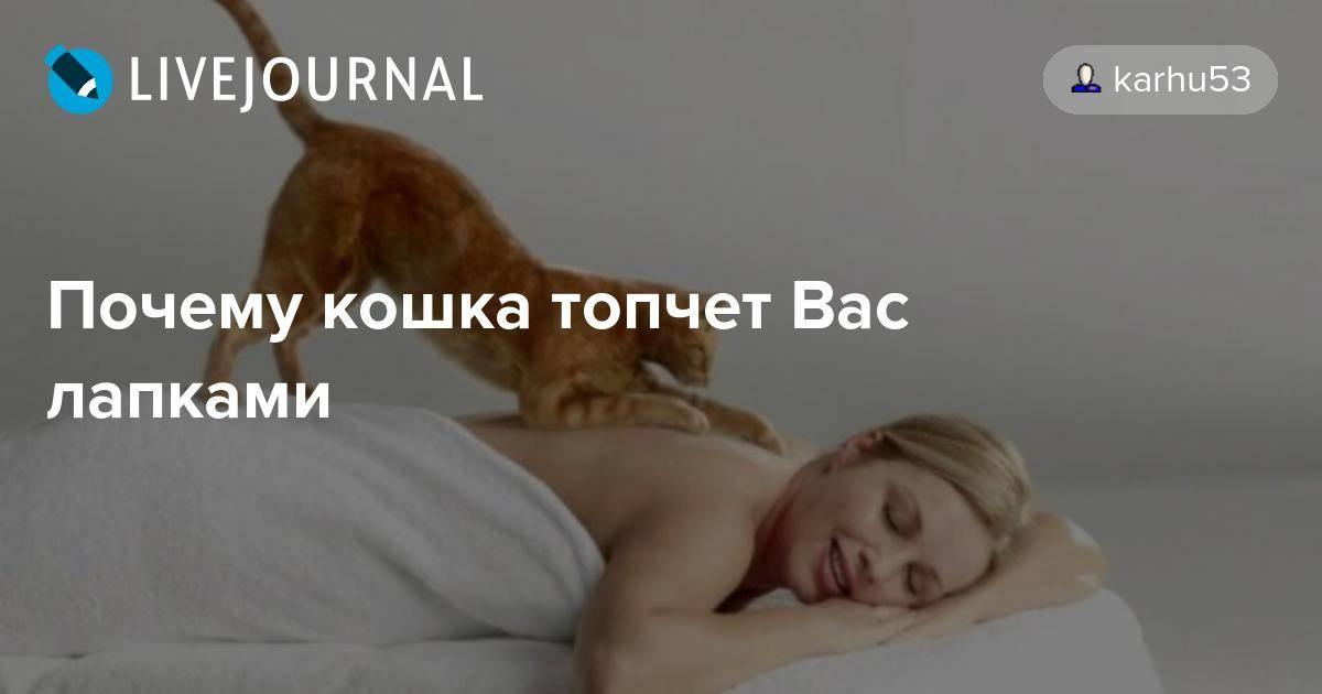 Почему кошки топчут нас лапками, как вести себя с питомцем