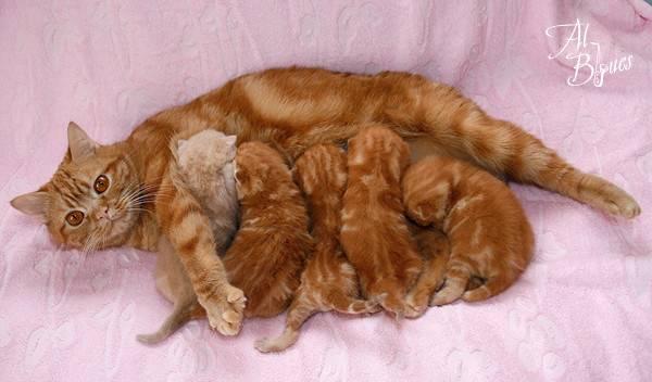 Заведите рыжего кота или кошку: подборка примет и интересных фактов