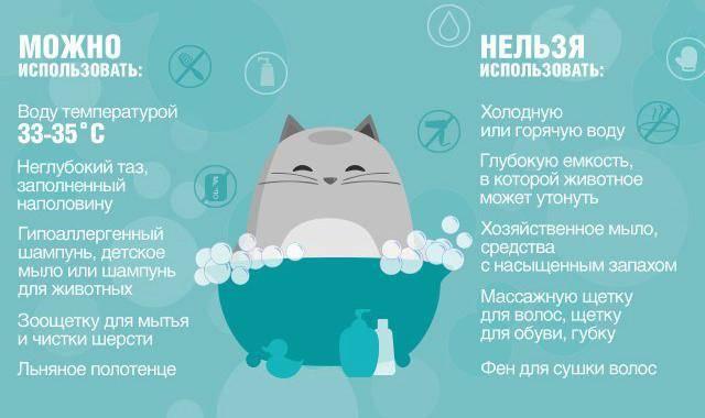 Как ухаживать за котенком в первый второй и третий месяц