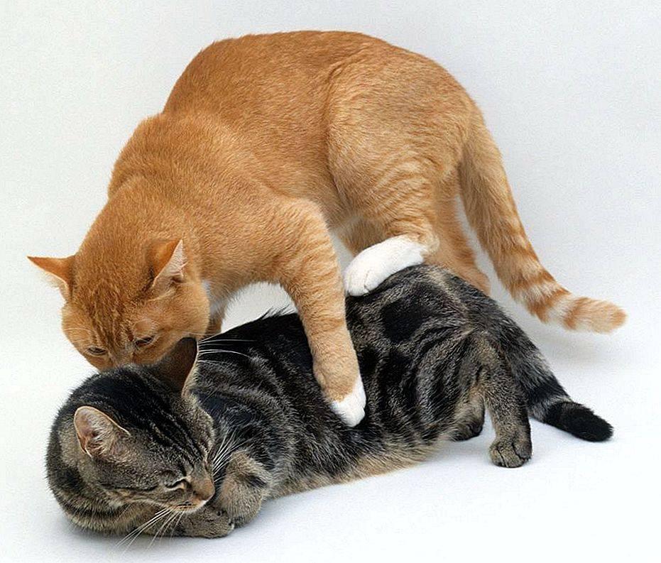 Почему кошка рычит и шипит на своего котенка, что делать?