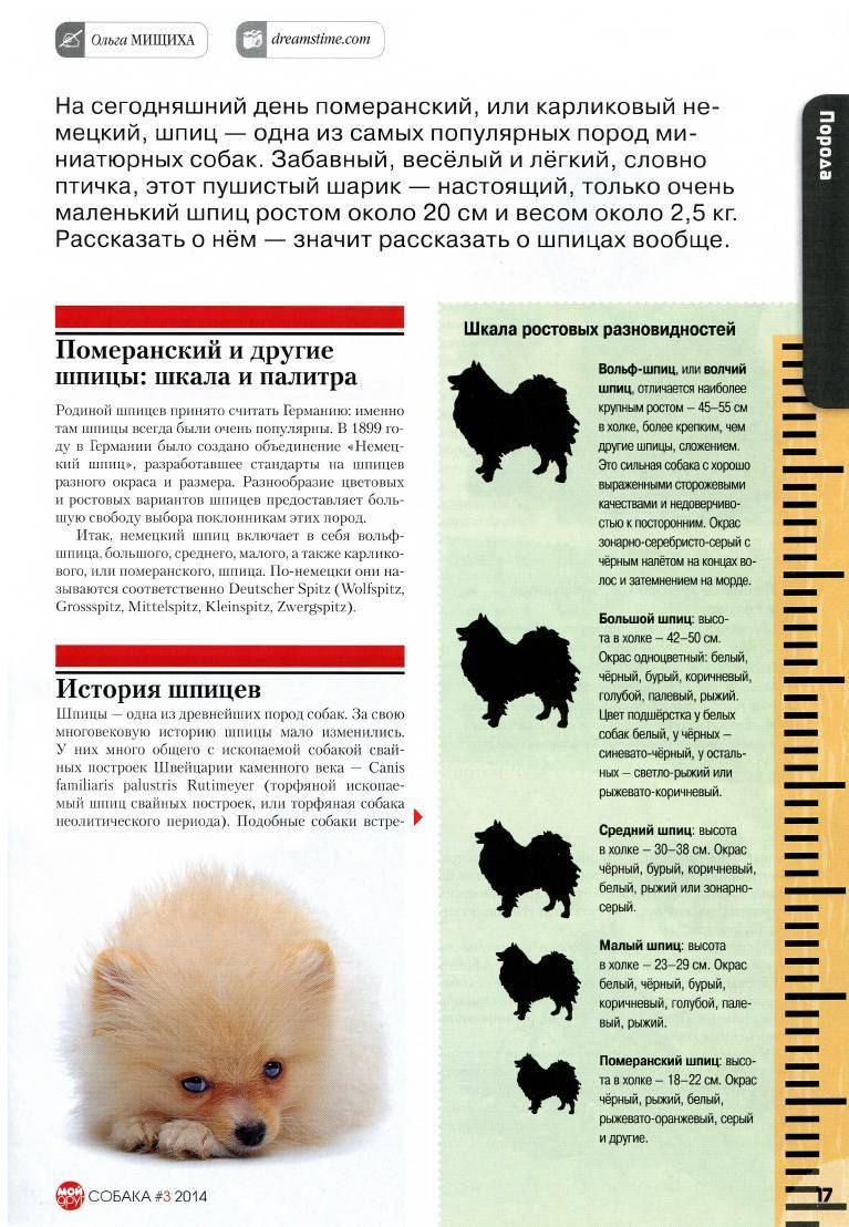 Пти брабансон собака. описание, особенности, уход и цена породы