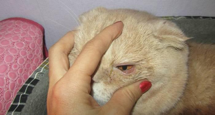 Что делать, если кот чихает и него слезятся глаза?