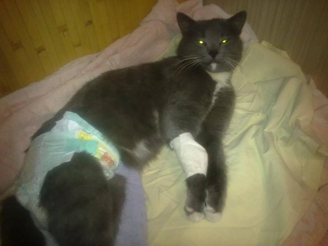 Лимфома у кошек: насколько опасно это заболевание и как можно его вылечить