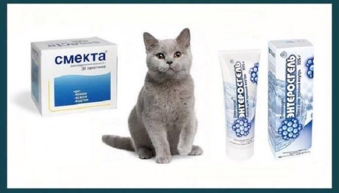 У кошки понос с кровью: что делать и как лечить