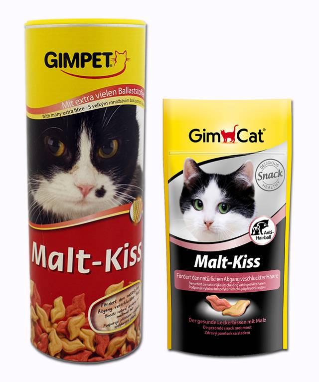 """Если кошку рвет, что делать?     блог ветклиники """"беланта"""""""