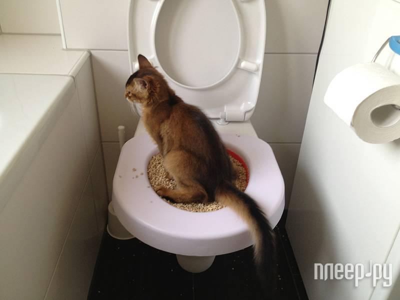 Сколько раз в день должен писать кот   мало ли 1 раз в сутки