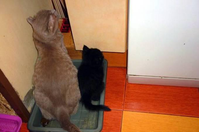 Кошка попой ездит по полу – о чем говорит симптом?