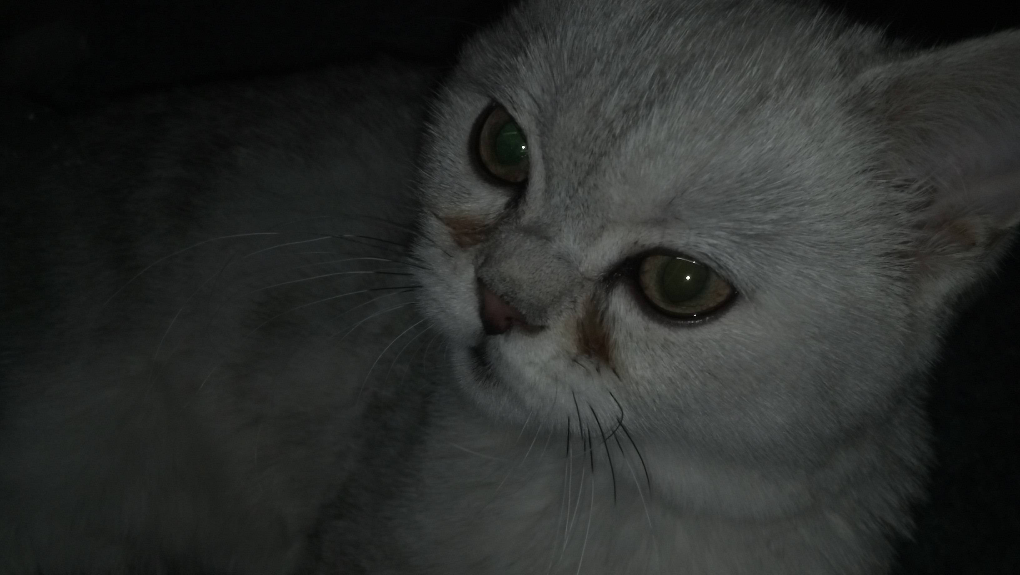 У кошки после еды слезятся глаза: причины, породные особенности, возможные патологии, что делать