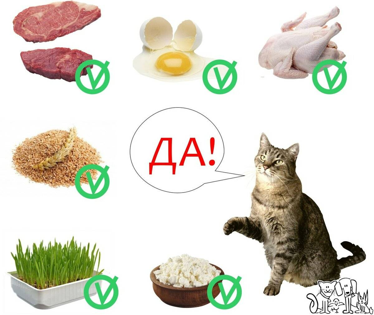 Чем нельзя кормить кастрированного кота и почему