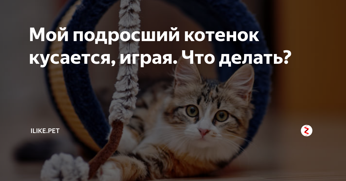 Меняются ли у кошек зубы. у котенка режутся зубы: что надо делать и что не надо