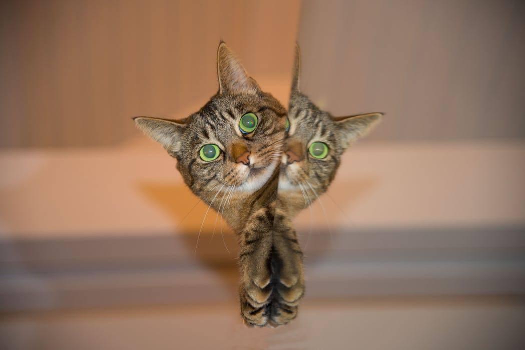 Самые умные породы кошек - кто они?
