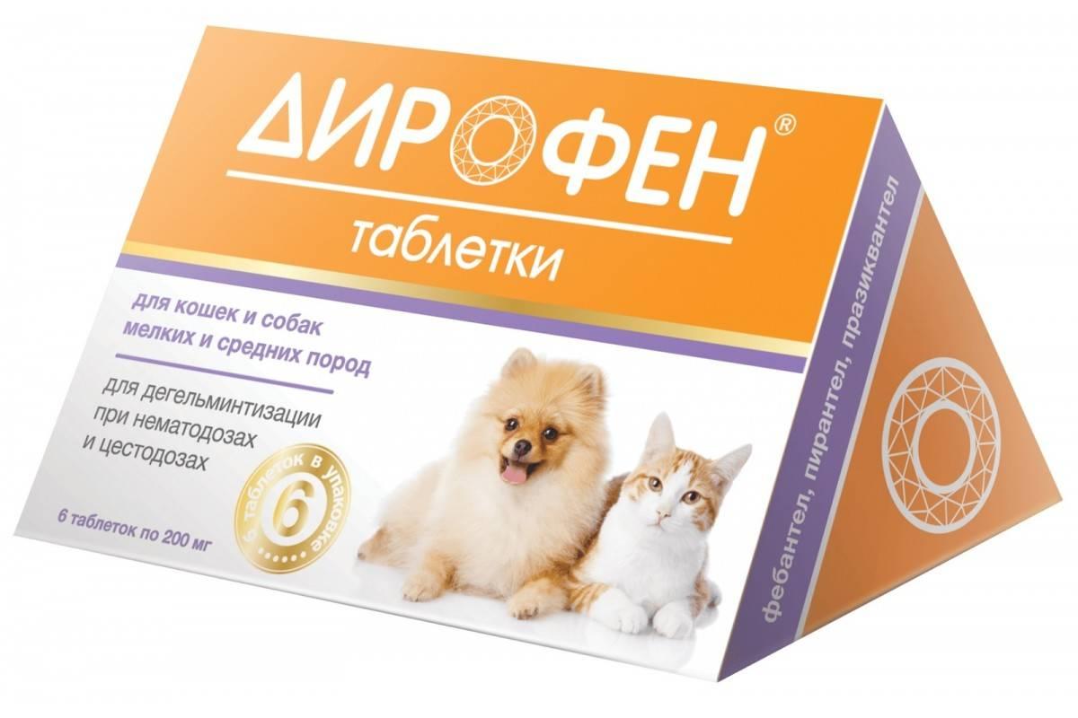 Дирофен для кошек: показания и инструкция по применению, отзывы, цена