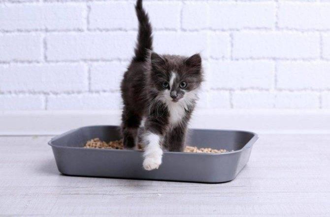 Как приучить кошку к сухому корму?