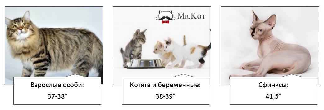 Какая температура у кошек считается нормальной?