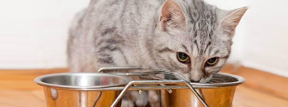 Как ест кошка: интересные наблюдения