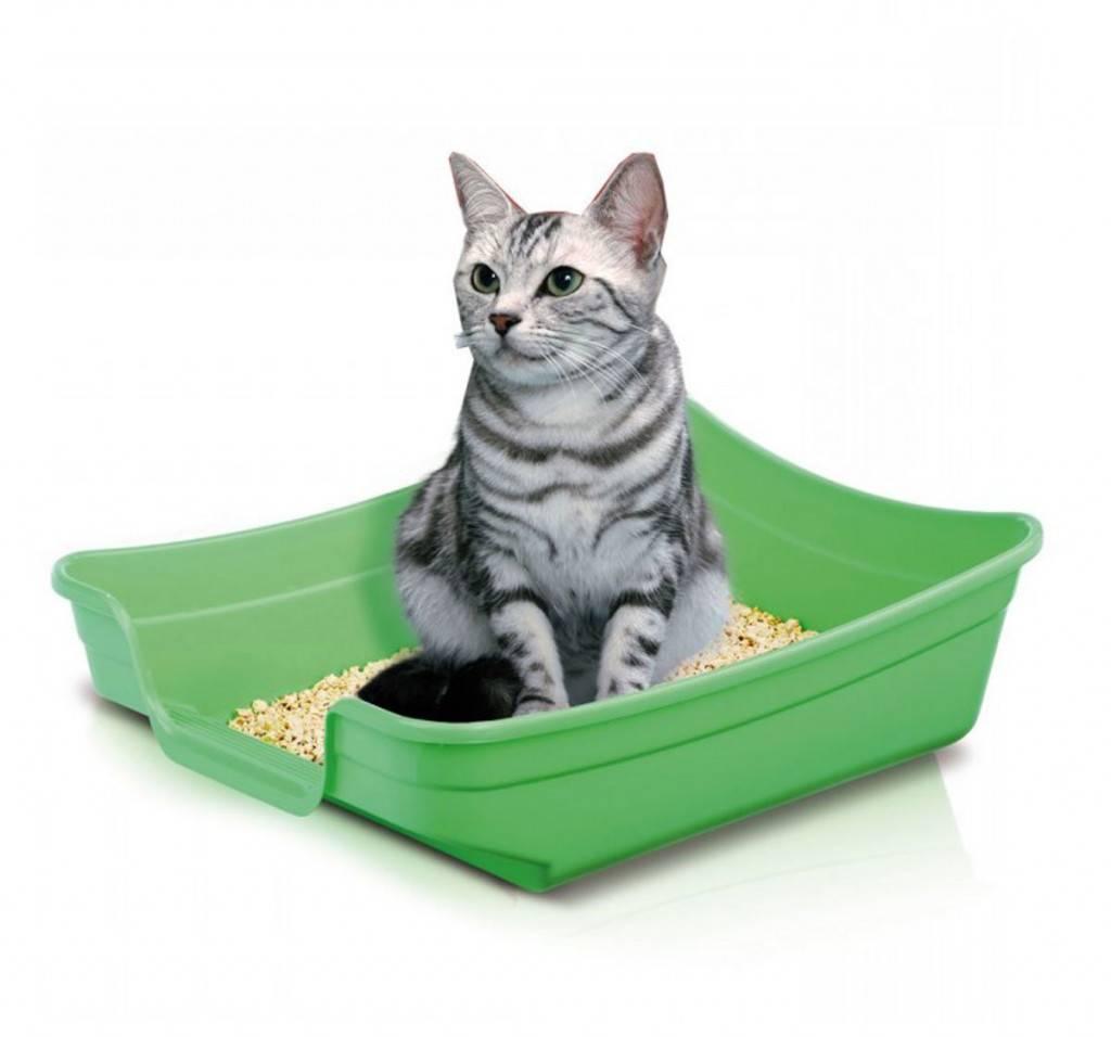 Кот перестал ходить в лоток: причины и методы воздействия