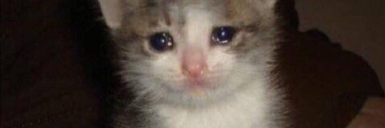 Могут ли кошки плакать - что означают слезы у кошки, причиняют ли кошке слезы боль