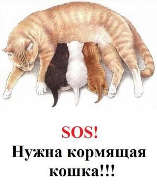На какой день течки кошка может забеременеть, кошачий помощник