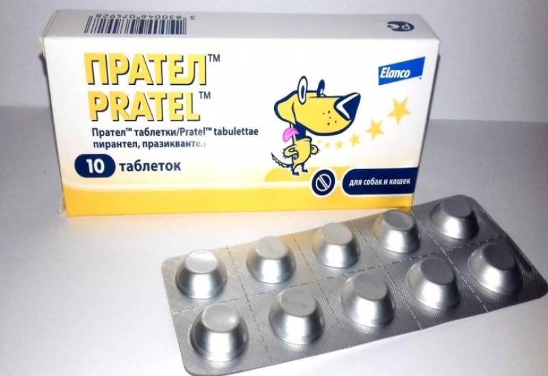 Прател для кошек: состав и форма выпуска, инструкция по применению и дозировка таблеток pratel, аналоги и цена