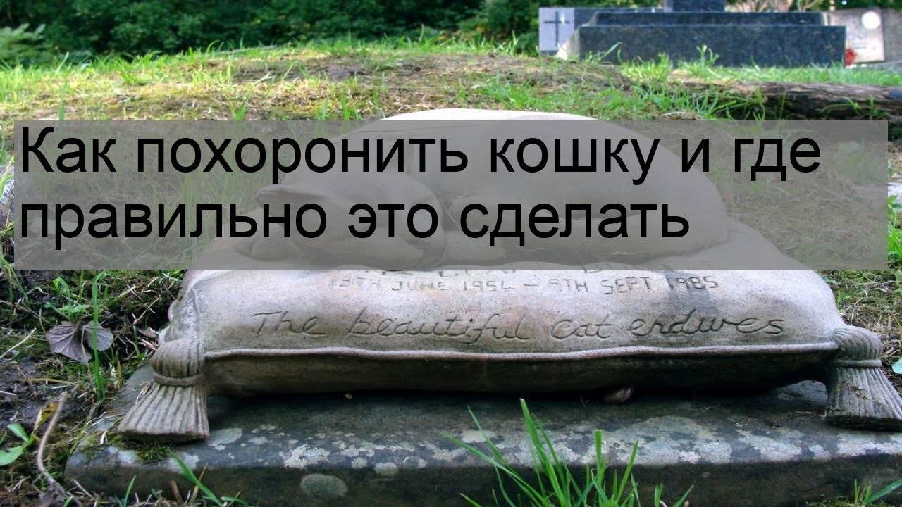 Можно ли похоронить домашнее животное на человеческом кладбище?