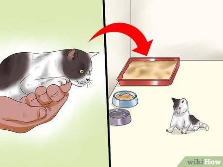 Когда можно отдавать котят