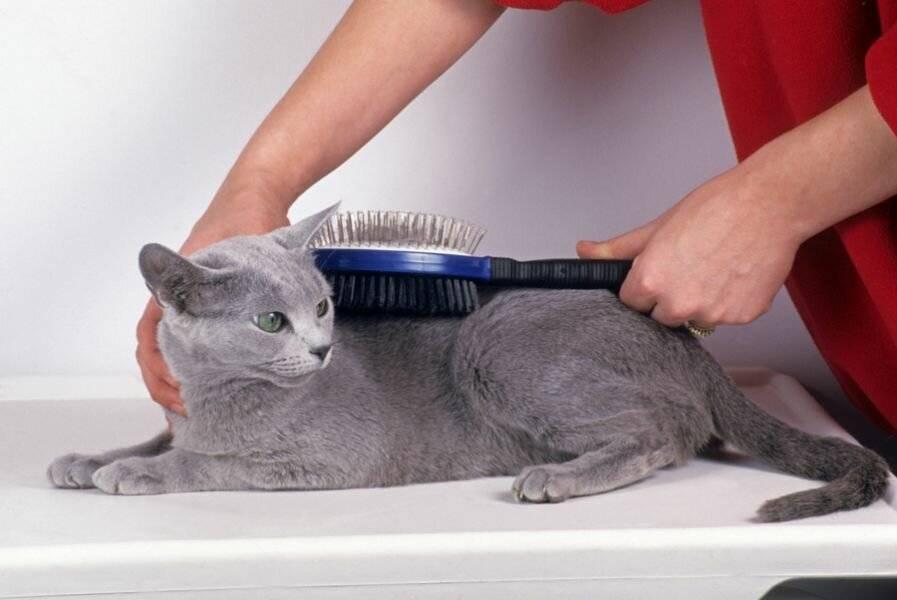 Уход за кошками: как содержать и ухаживать за питомцем в домашних условиях