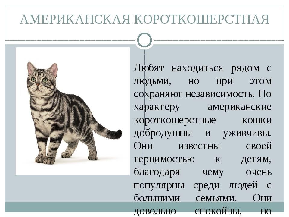 Описание породы анатолийская короткошёрстная кошка