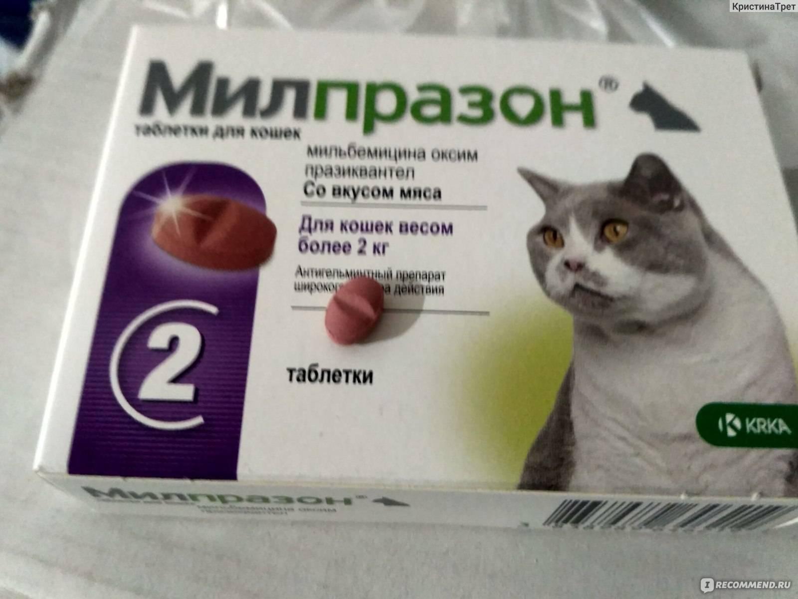 Инструкция по применению препарата милпразон для кошек и котят