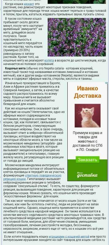 Что такое кошачья мята, для чего она нужна, фото, где взять, влияние на кошек
