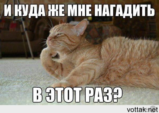 Почему кошка перестала ходить в лоток и как исправить ситуацию?
