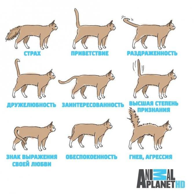 Затяжные роды у кошки, что это такое и чем помочь