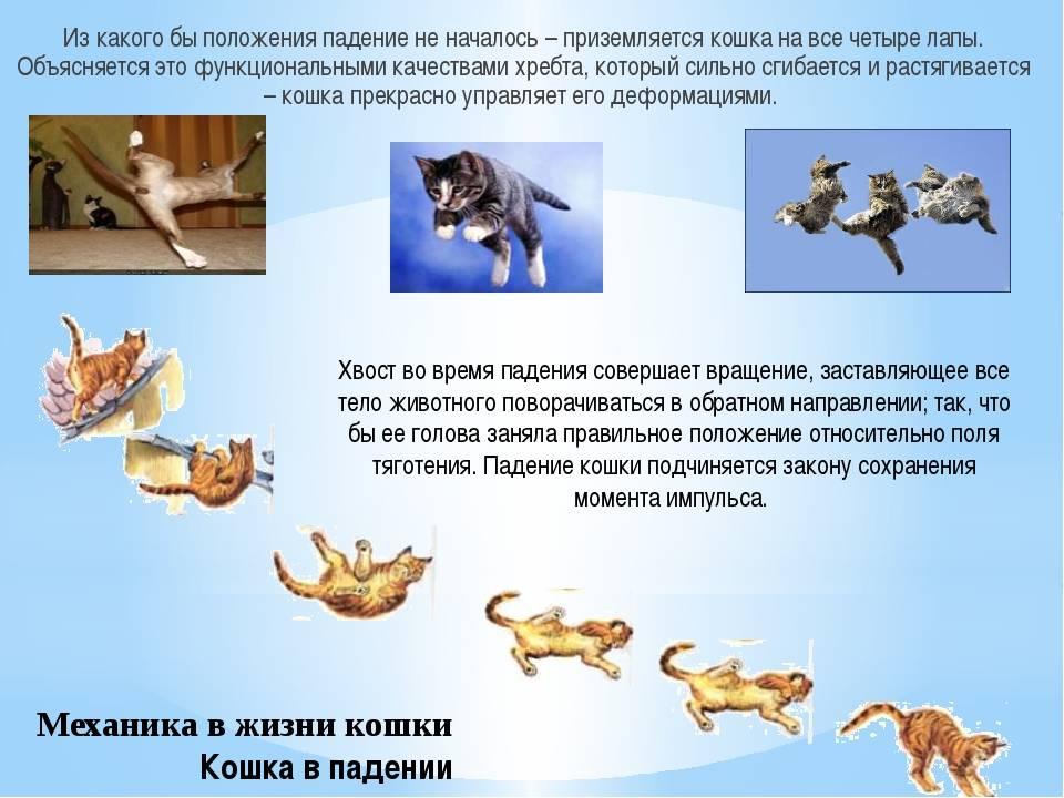 Как кошки всегда приземляются на лапы?