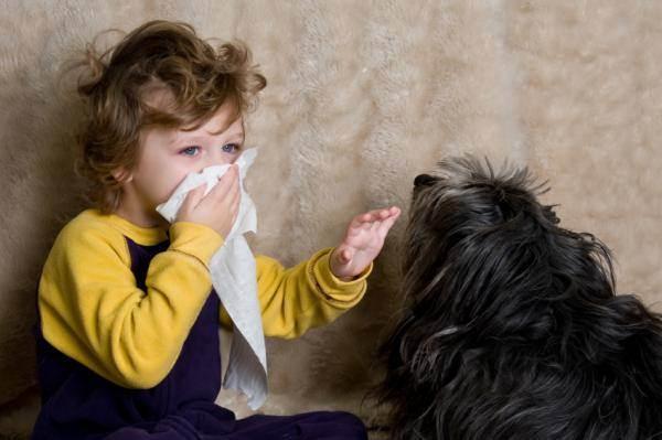 Как распознать первые признаки аллергии на животных?