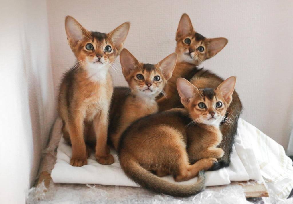 Самые спокойные породы кошек для квартиры | какие коты