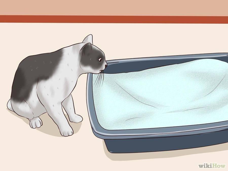 """Моча кота стала резко пахнуть: причины, диагностика, лечение   блог ветклиники """"беланта"""""""