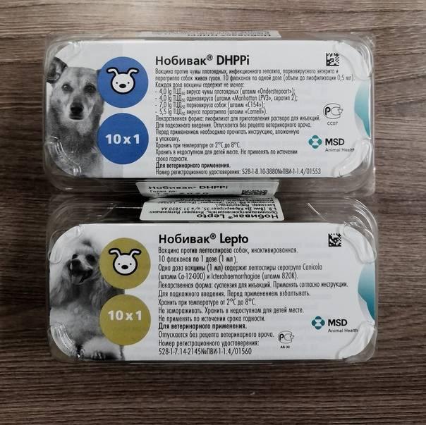 Вакцина для котов нобивак