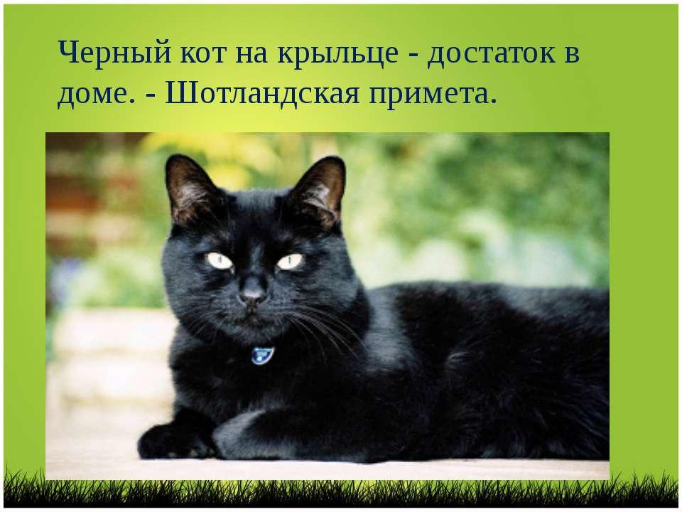 Кошачья магия: чем помогает кошка в доме!