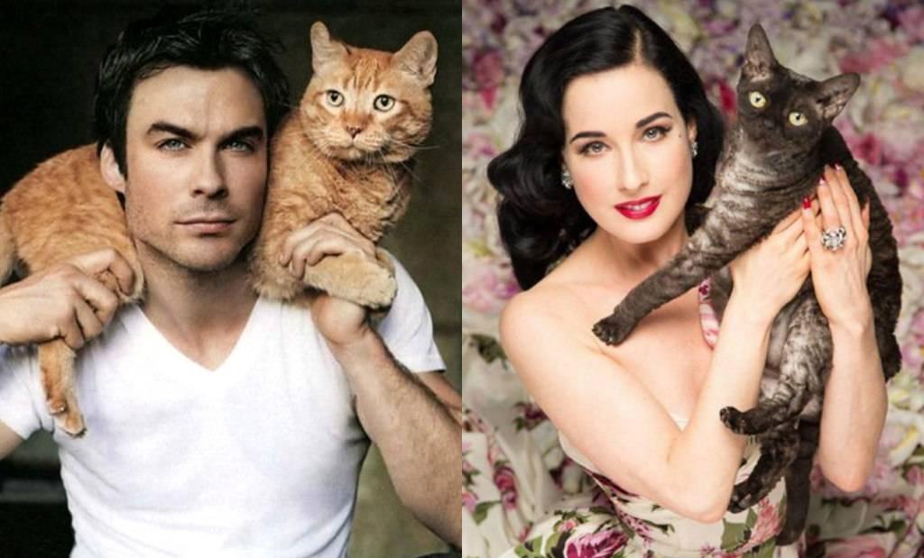 Самые популярные коты в мире: 9 животных, которые стали звездами сети - досуг - животные на joinfo.com