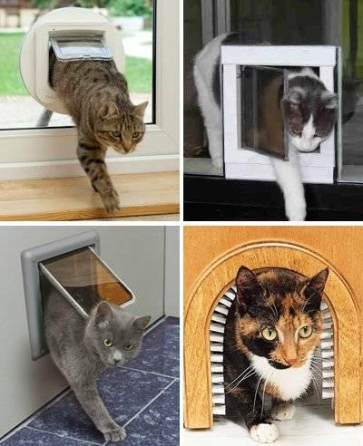 Двери для кошек: виды проходов и как сделать дверцу своими руками