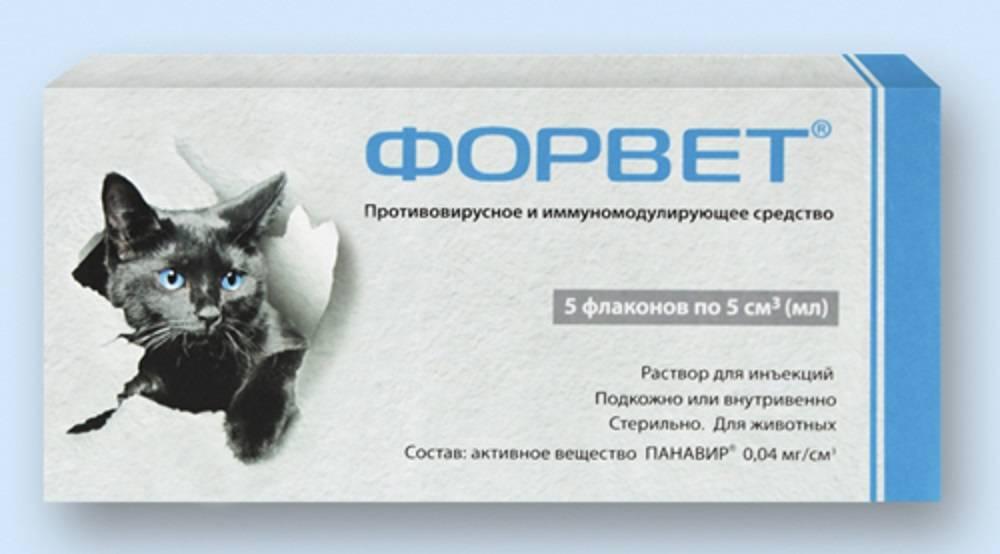 Фелиферон для кошек: инструкция и показания к применению, отзывы, цена