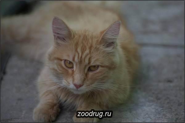 Как показать кошку ветеринару если она сопротивляется