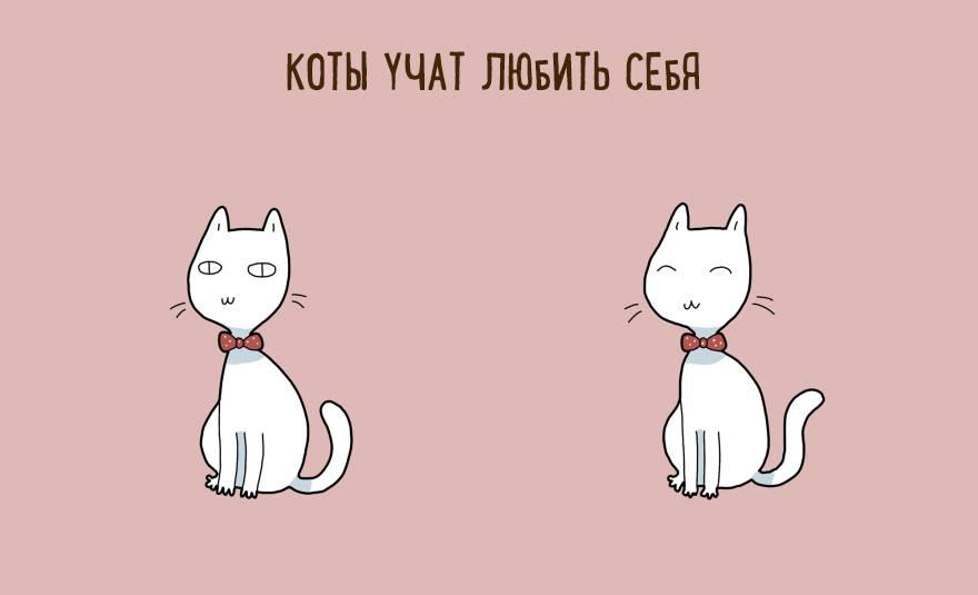 Что делать, если кошка постоянно просит есть?