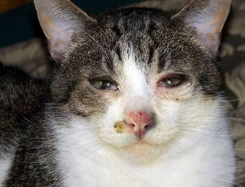 Как понять, что кот заболел – основные признаки развития патологий у кошек