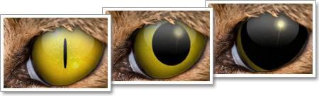 Колобома радужки: как видят люди, у которых «кошачьи» зрачки
