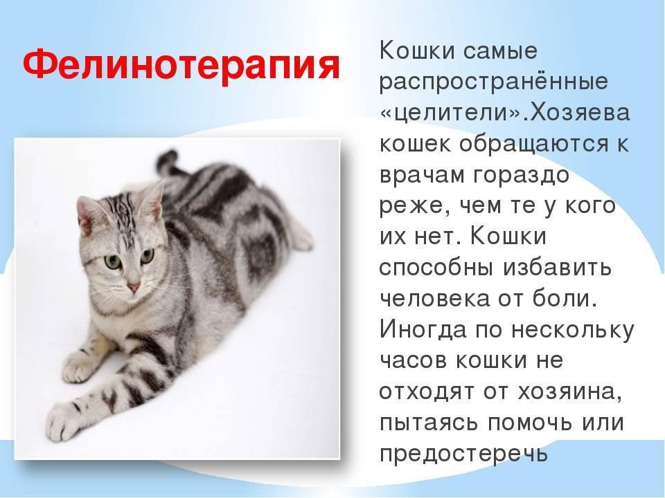 Кошка пришла в дом: примета – к чему приходит беременная, забежала в квартиру, прибился котенок