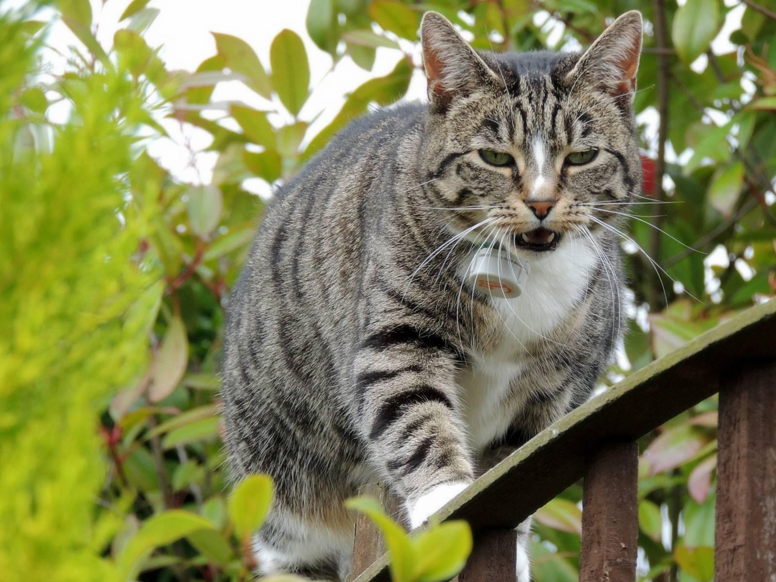 Серый кот: самый терпеливый друг и верный компаньон